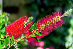 A beautiful flower. A picture of the beautiful flower in foreground Royalty Free Stock Images