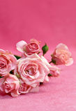 Beautiful flower pink  roses Royalty Free Stock Images
