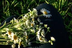 Beautiful flower plant in grassland in sunshine, summer nature m stock photos