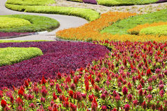 Beautiful flower plantation decorated in garden Stock Photo