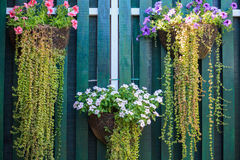 Beautiful Flower Planter Hanging Royalty Free Stock Photography