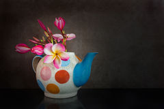 Beautiful flower plumeria or frangipani in teapot Stock Photos