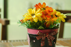 Beautiful flower pot decoration on coffee table Royalty Free Stock Image