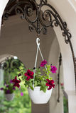 Beautiful flower pot. Framing house entrance Stock Photo