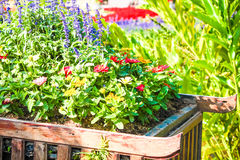 Beautiful flower pot in garden Royalty Free Stock Images