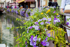 Beautiful flower pots along the canals in Annecy, France, known Royalty Free Stock Photography