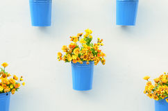 Beautiful flower in pots on white wall Stock Images