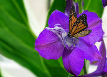 Beautiful flower with purple petals and butterfly. royalty free stock photography