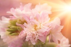 Beautiful flower is in the rays of light, blured and colored Stock Images
