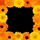 Beautiful Flower rectangle frame. For design isolated on black background. Floral arrangement of yellow and orange marigolds flowers. Flat lay. Top view. Web Royalty Free Stock Image