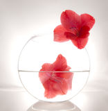 Beautiful flower in a round vase Stock Photography