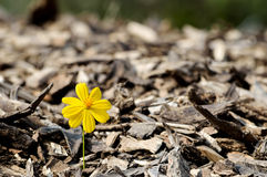 Beautiful flower seedling growing Royalty Free Stock Images