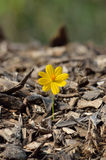 Beautiful flower seedling growing. As a concept of new life Royalty Free Stock Photos