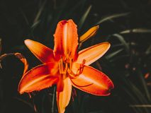 Beautiful flower seen from close up royalty free stock images