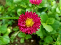 Beautiful Flower. Selective focus of a flower Stock Image