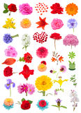 Beautiful Flower Set Isolated on White Background Stock Photography