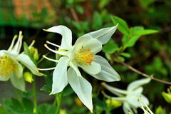 Beautiful flower in the spring garden stock photography