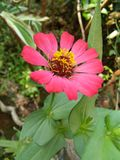 Beautiful flower of sri lankan natural photo stock images
