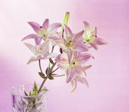 The stalk with inflorescences. Beautiful flower stands in a vase on the table isolated in the lilac background Stock Photos