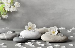 Flower and stone zen spa on grey background. Beautiful flower and stone zen spa on grey background Royalty Free Stock Image