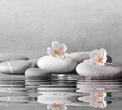 Flower and stone zen spa on grey background. Beautiful flower and stone zen spa on grey background stock images