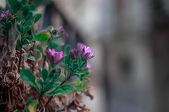 Bokeh of a pretty flower royalty free stock photography