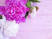 Beautiful flower summer peony birthday romantic on pink wooden background. frame. Beautiful flower peony on pink wooden background frame romantic summer birthday stock photo