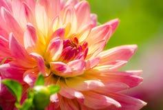 Beautiful flower, summer scene, macro Stock Photo