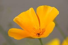 Beautiful Flower. On the summer wind Stock Photos