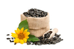 Beautiful flower of a sunflower and roasted sunflower seeds on a white background. An isolated object Stock Photography