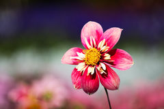 Beautiful flower in a sunlight Stock Photo