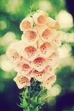 Beautiful flower in sunlight. Nature vintage style. Royalty Free Stock Image