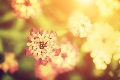 Beautiful flower in sunlight. Nature vintage style. royalty free stock images