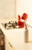 Beautiful flower on table in modern kitchen Royalty Free Stock Image