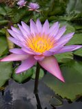 Beautiful flower. Taken in a resort in India Stock Image