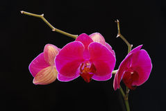 Beautiful flower to orchids Stock Photos
