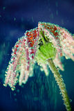 Beautiful flower under water with bubbles Stock Images