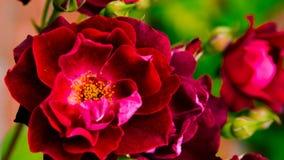 Beautiful flower Stock Photo