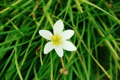 Beautiful Flower. Beautiful white Flower Stock Image