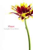A beautiful flower Stock Photography