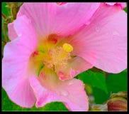 The beautiful flower Stock Image