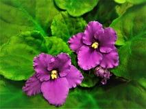 Beautiful flower in the garden Stock Image