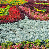 Beautiful flowerbed Royalty Free Stock Image