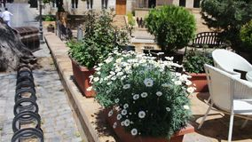 Beautiful flowerbed with flowering daisies on the streets of the capital city of a capital of Azerbaijan, Baku stock video footage