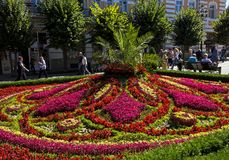 Beautiful flowerbed in Kislovodsk Royalty Free Stock Photos