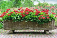 Beautiful flowerbed Stock Photo