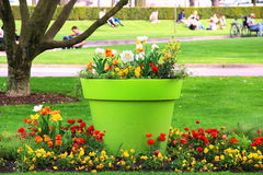 Beautiful flowerbed in the park in Strasbourg Stock Photography