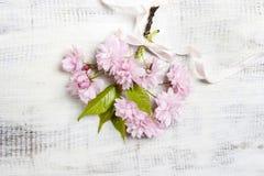 Beautiful flowering almond (prunus triloba) on wood Royalty Free Stock Photos