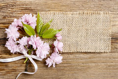 Beautiful flowering almond (prunus triloba) Royalty Free Stock Image