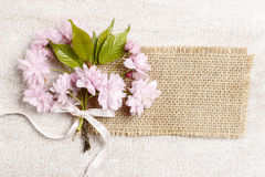 Beautiful flowering almond (prunus triloba) on wooden background Royalty Free Stock Photography